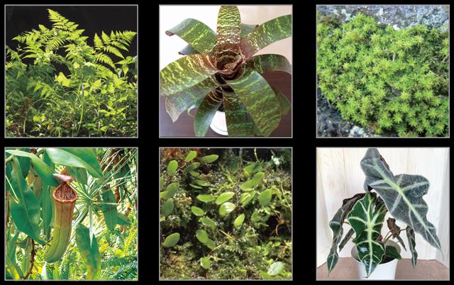 Fog(フォグ) 使用植物一例