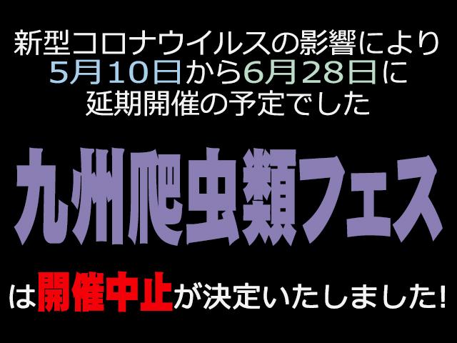 九州レプタイルフェス (九レプ) 開催中止